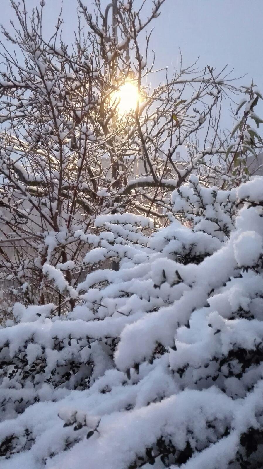 sole d'inverno