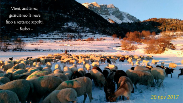 Neve, pecore